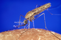 La malaria en recul au Rwanda