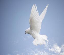 Symbole de la paix