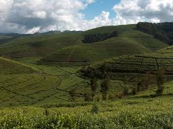 Rwanda, le pays des milles collines