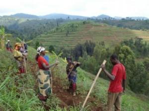 Rwanda : Les réformes agraires et foncières, quel impact pour les petits producteurs ?