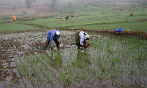 Quel avenir pour les paysans rwandais?
